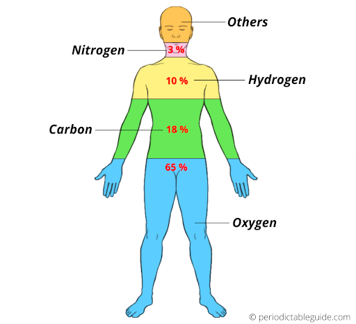 carbon in human body