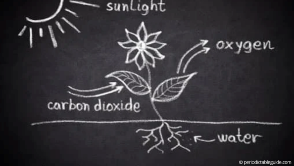 importance of carbon in photosynthesis